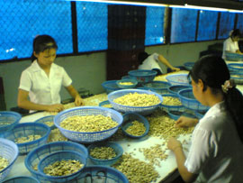 cashew industry in india marketing plan The peak seasons of output in different regions are approximately: india, vietnam, west africa: march - june brazil: july - february east africa: october - december the cashew nut arrivals of india, vietnam, côte d'ivoire, nigeria and ghana coincide with one another whereas the arrivals of brazil, indonesia and other african countries like tanzania.