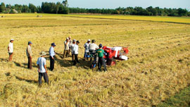SRI Helps Vietnam's Small-scale Farmers Increase Production
