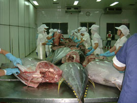 Phu Yen Cooperates with Japanese Firms in Tuna Processing