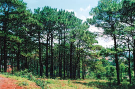 WB to Finance Forest Development Project
