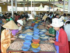 Import Tax on Raw Cashew Nuts Cut to 3%