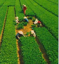 Solutions to Boost Vietnam Vegetable Export