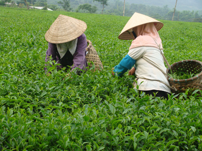 Yen Bai Focuses Resources for Development