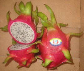 Binh Thuan Dragon Fruit Brand Protected in the US