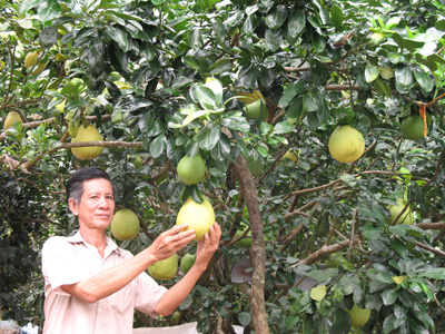 Growers, Businesses Need to Join Hands to Build Fruit Brands