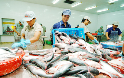 tax to us of vietnamese pangasius Vietnamese pangasius exports pass first us test vietnam satisfies us department of agriculture's first test for continuing to export pangasius to the country.