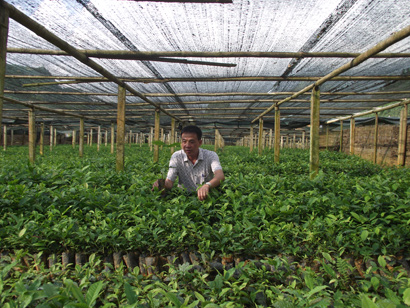 Thanh Binh Lao Cai Tea One-member Co., Ltd: Efficient, Sustainable Tea Management and Production Model