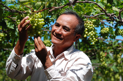Elevating Ninh Thuan Grape Brand