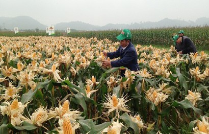 Vietnam – US Agricultural Cooperation: Bringing Opportunities for Vietnam Agricultural Products