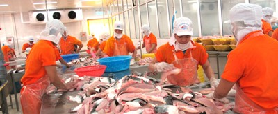 How to Enhance Role of Trading Companies in Value Chain of Rice and Catfish?