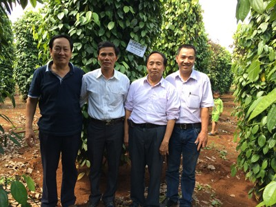 Minh Nhat Vina Coffee Co., Ltd: Committed to Successfully Building Large- scale Field Model in Dak Nong