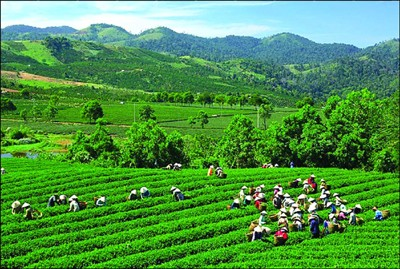Vinh Phuc: Boosting Investment in Agriculture and Rural Sectors