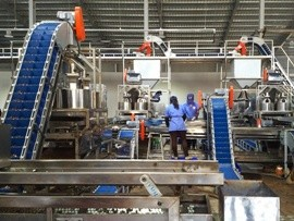 A cashew processing line in Vietnam. Photo: VTK