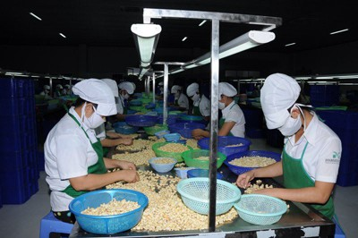 Establishing Sustainable and High Value-Added Cashew Industry of Binh Phuoc