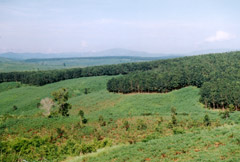 Three Forest Development Projects Proposed for 2006-07
