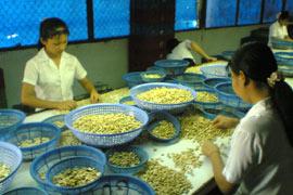 Binh Phuoc Province: Vietnam's Cashew Capital