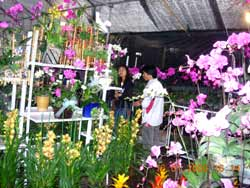 exporting flowers to japan Japan is currently our 4th largest goods trading partner with $1955 billion in total (two way) goods trade during 2016 goods exports totaled $633 billion goods.