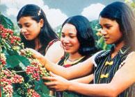 Vietnamese Coffee Industry's Sustainable Development Strategy