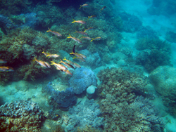 Nha Trang Bay Maritime Conservation Zone: Needing Master Plan