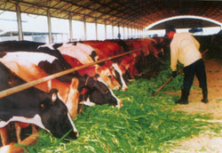 Vietnam to Host First Int'l Dairy Expo This Month