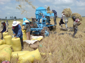 Vietnam Rice Exporters to Face Fiercer Global Competition