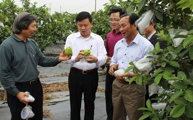 Hai Phong Agriculture: Enhancing Added Value and Sustainable Development