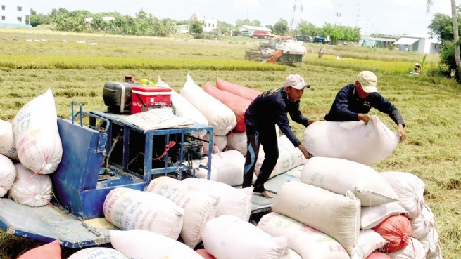 Continuing to Boost Rice Exports