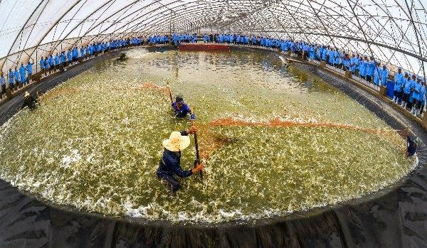 """Tôm giống Việt - Úc Ninh Thuận: """"Mục tiêu cuối cùng vẫn là sự thành công của người nuôi tôm"""""""