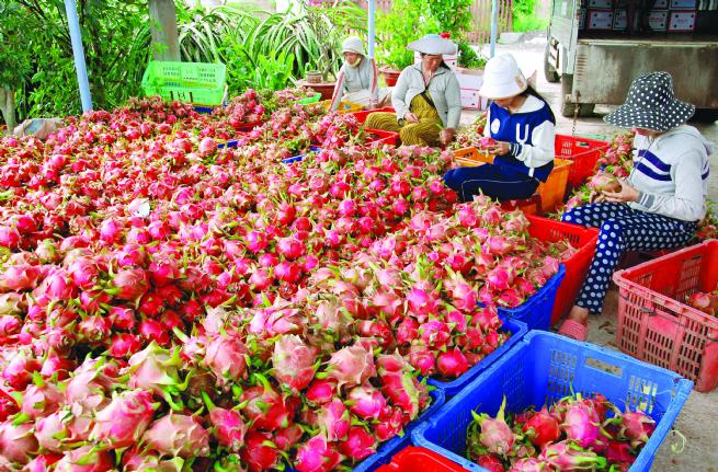 Vietnam Promoting Agricultural Exports amid New-Generation FTAs