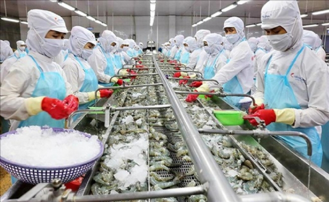 Clear Risks of Seafood Production and Export Chain Disruptions